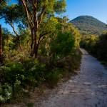 Banksia aemula country