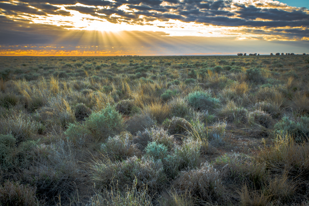 Grassland plain at sunrise